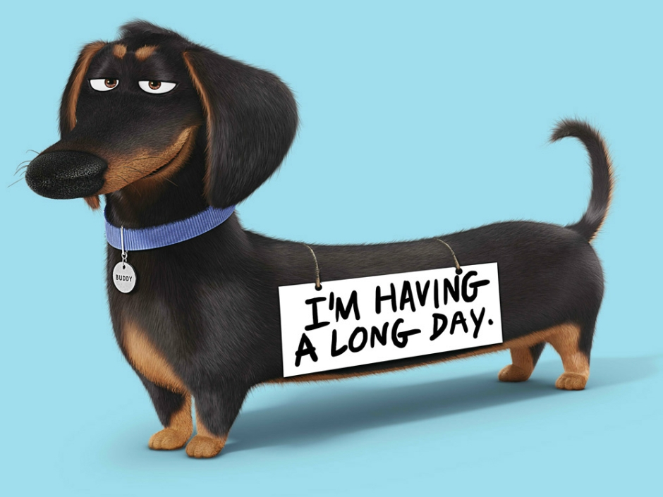 the secret life of pets characters take a bow in own